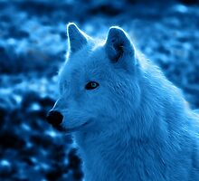 Wolf in Blue by Sandy Keeton