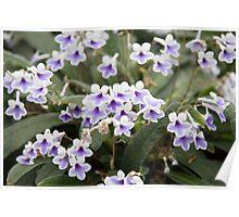 littlepurpleflower  Poster