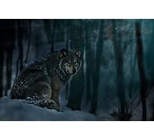 Timberwolf in Moonlight Photographic Print
