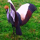 Crowned Crane by Dawn B Davies-McIninch