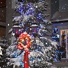 Seasons Greetings, Night  Lights by eoconnor