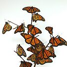 Full Monarch Butterfly Tree by Molly  Kinsey