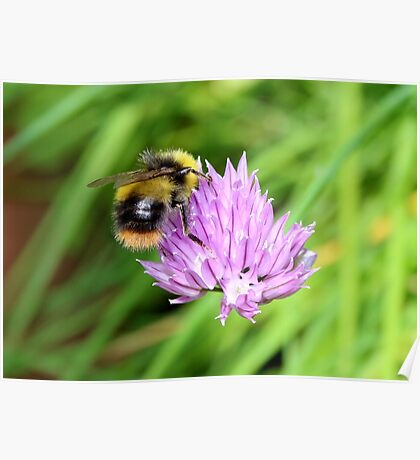 Bee & Chives Poster