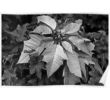 Seasonal Leaves 2 Poster