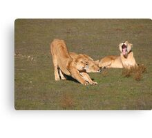 Sleepy Lionesses Canvas Print