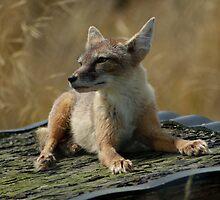 Foxy baby by jaymadness