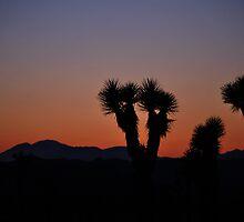 Desert Sunset Joshua Tree National Park  by John Anderson