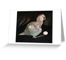 Macaw 6 Weeks Greeting Card