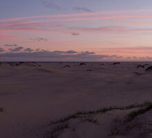 Dusk in the dunes by Will Hore-Lacy