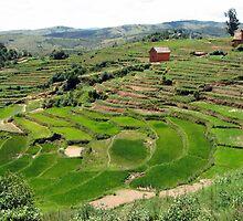 an amazing Madagascar landscape by beautifulscenes