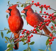 Red Birds and Red Berries by Bonnie T.  Barry