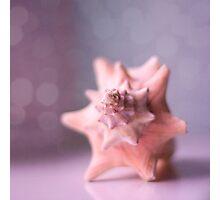SeaShell Photographic Print