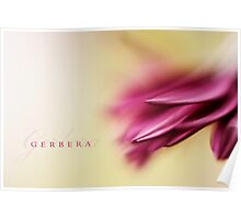 Gerbera Poster
