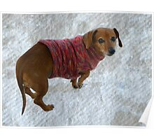 Snausage In A Sweater Poster