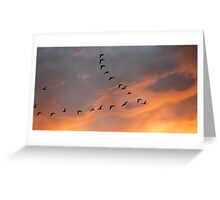 Canada Geese, Sunset Greeting Card