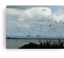 Migratory Birds - Banksia Beach Bribie Island Canvas Print