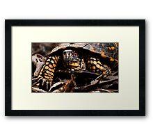 Box Turtle, Virginia Framed Print