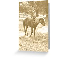 Old Fashioned Pony Greeting Card