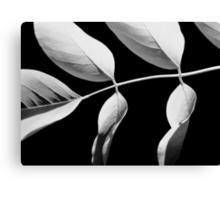 Acacia in Black & White Canvas Print