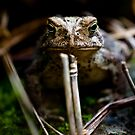 Toad, Cootes Store, Virginia by Steven David Johnson