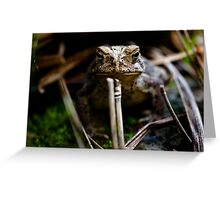 Toad, Cootes Store, Virginia Greeting Card