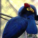 I love blue birds by loiteke