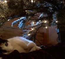 Spunky under the tree. by thsee