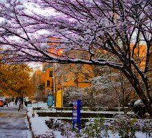 Ready for winter by LudaNayvelt
