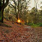 Light of Hope by Mark Snelling