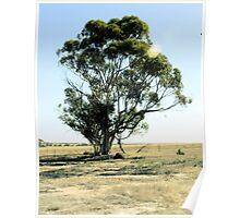 Farm Tree Poster