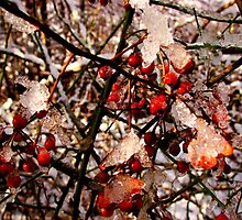 Frozen Berries by Tricia Stucenski