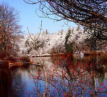 Winter Waterscape by Tricia Stucenski
