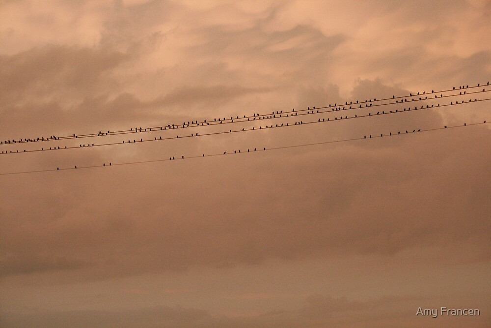 Birds on a wire by Amy Francen