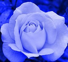 A Rose .. Blue on Blue by LoneAngel