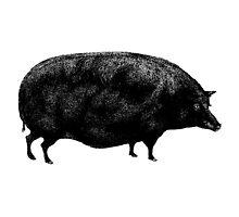 Black Vintage Pig by AntiqueImages