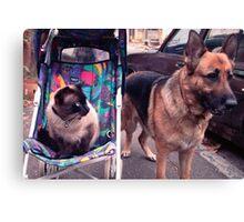 Basil and Bella Canvas Print