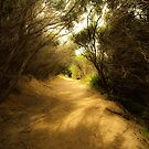 Pathway to the Beach by Caroline Gorka