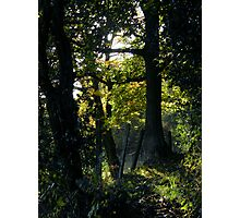 Secret Glade Photographic Print