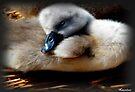 Sleepy Head by naturelover
