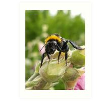 Wet Bee Art Print