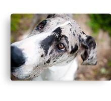 Giselle the Great Dane Canvas Print