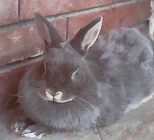 In memory of my beloved bunny... by AleFletcher