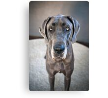 Lupe the Great Dane Canvas Print