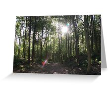 Autumn in Dunottar Woods Greeting Card