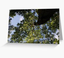 Dunottar Woods - Looking Up Greeting Card