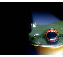 Red Eyed Green Tree Frog Photographic Print