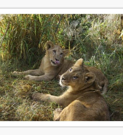 Sibling | Lion Cubs Sticker