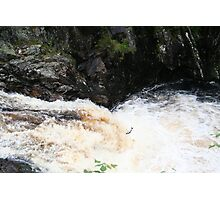 Salmon leaping Photographic Print