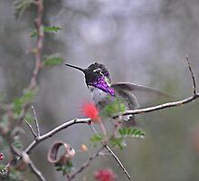 Little Purple Beauty  by Judy Grant