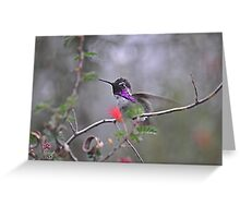 Little Purple Beauty  Greeting Card
